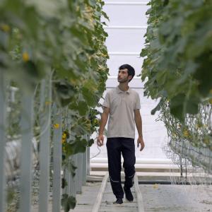 #Թումո10. Ռաֆի` նախկին ծրագրավորող, ներկա գյուղատնտես